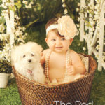 Dog-And-Baby-In-Bucket-Portraits-Mar-Vista