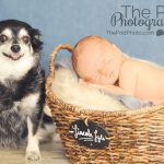 newborn-baby-with-dog-pet-friendly-photo-studio-manhattan-beach