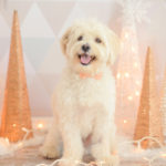 Best-Family-And-Pet-Photographer-Los-Angeles